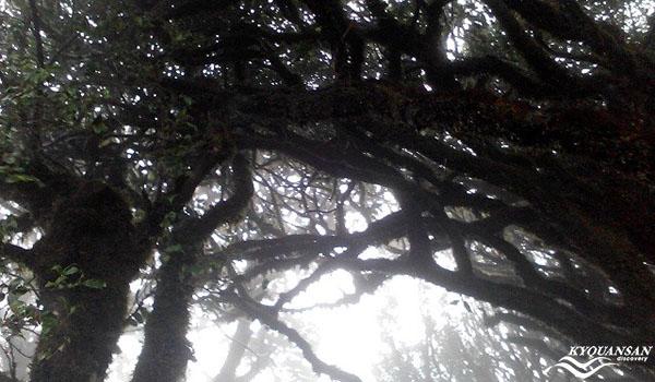 Có những rừng cây huyền bí