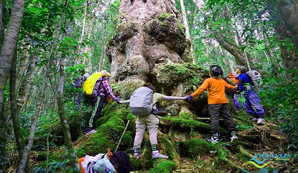 Vườn Quốc Gia Chư Yang Sin - Krông Bông