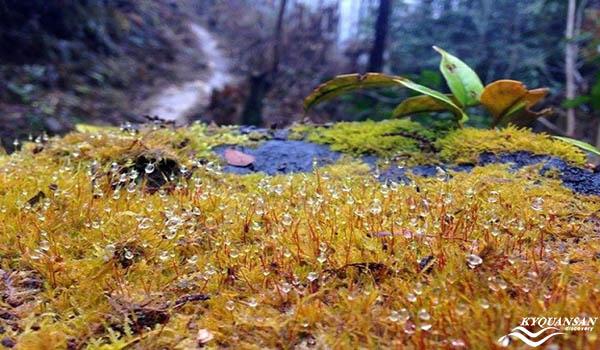 Thảm cỏ dại đẹp như san hô