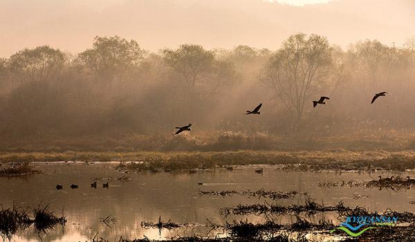 upo-wetland-10