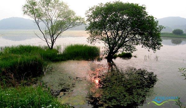 upo-wetland-5